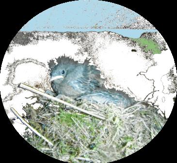 Vogel Frühling